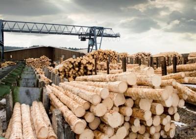 Sawmill Lumber Yard
